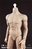 COO Toys Rubber Muscular Body B34005