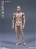Drawman - 1/12 Scale Body - DAM Toys