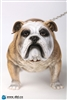 Animal Series - British Bulldog - Version A