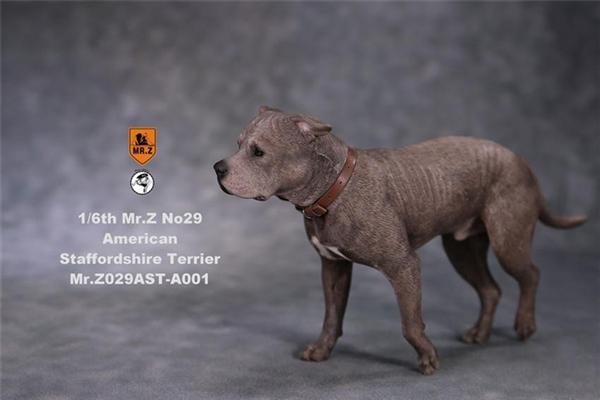 American Staffordshire Terrier - Version 001 - Mr Z 1/6 Scale Accessory