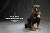 Rottweiler 2.0 - Version B - Mr. Z 1/6 Scale Figure Accessory