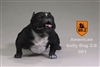 American Bully Dog 2.0 - Version 001 - Mr Z 1/6 Scale Accessory