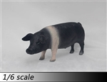 Pig Model - Version A in Black - ZY 1/6 Scale Accessory